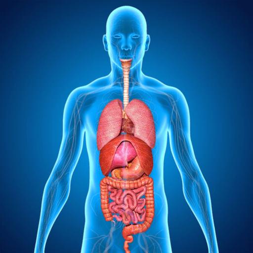 人体立体解剖安卓版