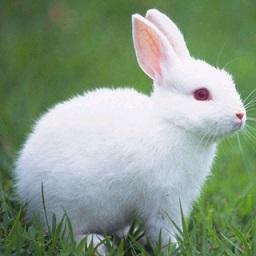 说话兔 v1.1.5 安卓版